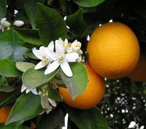 L'Arancio Amaro