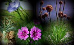 curarsi con le erbe