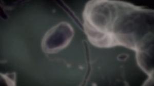 batteri unicellulari (1)