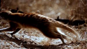 i suricati (3)