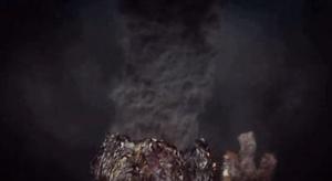 piante presenti negli oceani che emanano gas chimichi (6)